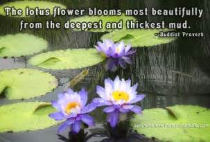 Lotus Flower Quote Buddha Lotus Flower Buddha Quotes Quotesgram