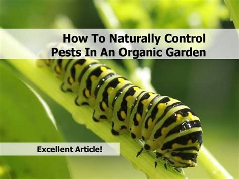 organic garden pest how to naturally pests in an organic garden
