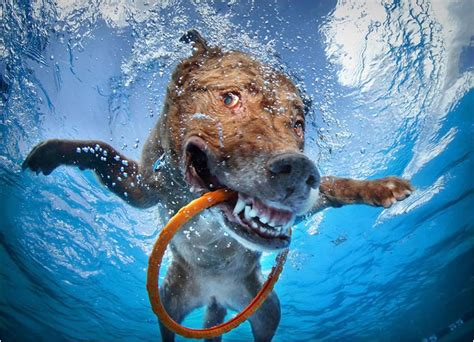 puppies underwater underwater dogs in swimming pools slapped ham