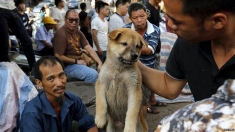 does china eat dogs why the uk doesn t eat but in china do newsbeat