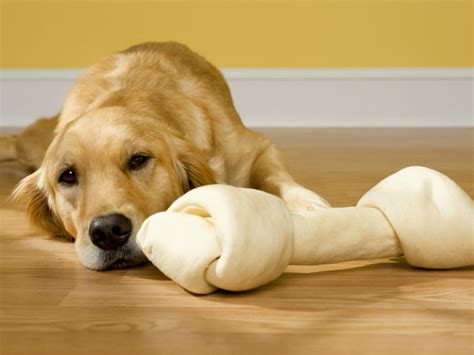 is rawhide bad for puppies is rawhide bad for dogs american kennel club