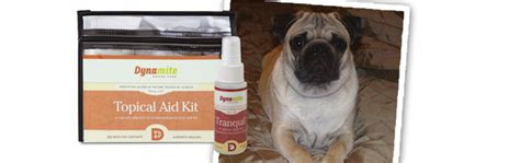 dynamite pug a pug s recovery with dynamite products