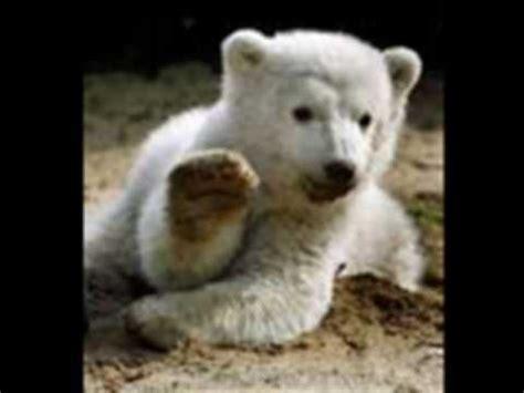 imagenes de animales zoologico animales de zoologico 0001 youtube