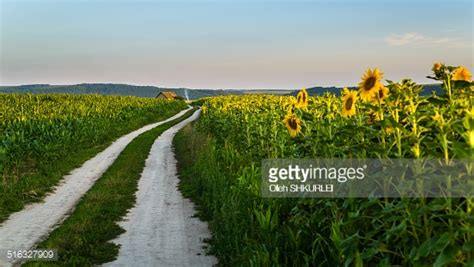 Ivnuo Lightblue wavy road in sunflower and corn fied stock photo getty