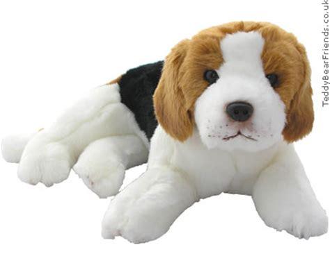 what is a teddy puppy beagle teddy hermann teddy friends