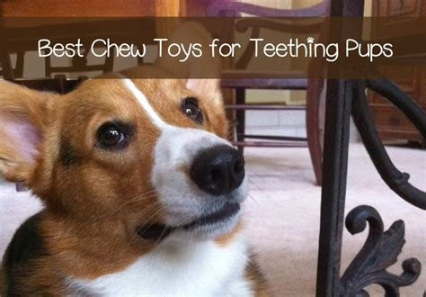 best chew toys for teething puppies the best chew toys for a teething puppy dogvills