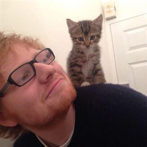 ed sheeran cats ed sheeran new single six things we learned listening to