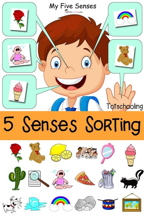 kindergarten activities senses five senses sorting printable sorting activities free