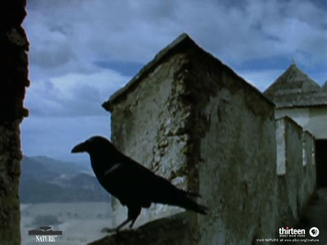 raven s end by ben gadd www coolclass ca conceived of