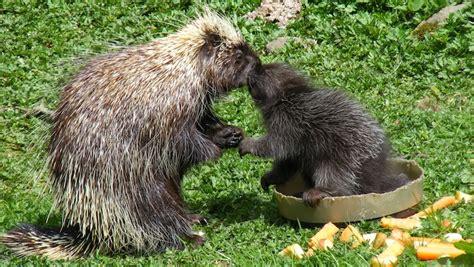 8 Strange Animal Mating Rituals by Animal Mating Habits Page 8 Askmen