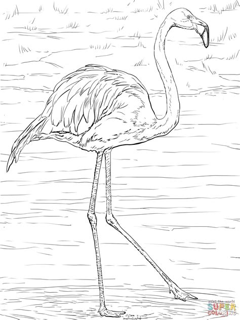 coloring pages dancing animals flamingo animal coloring pages free draw to color