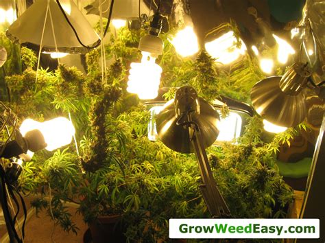 indoor marijuana grow lights easy beginner grow cannabis guide w cfl grow lights how