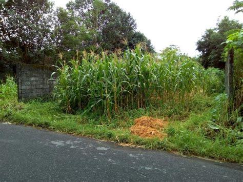 Harga Tanah Di Yogyakarta tanah dijual jual tanah murah jogja tanah di dekat jl