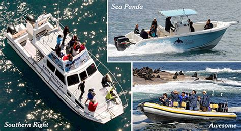 tow boat us prices simon s town boat company tours and cruises in false bay