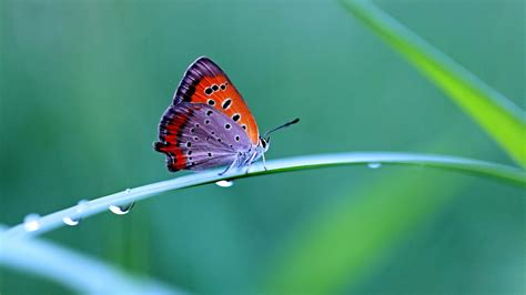 colorful butterfly wallpaper free download colorful butterfly wallpapers one hd wallpaper pictures