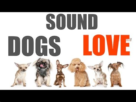 sound dogs love  time hq mpfordfiestacom
