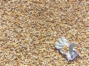 Gravel Cost Per Yard G L M Pea Gravel 95 Per Cubic Yard Glm Sod