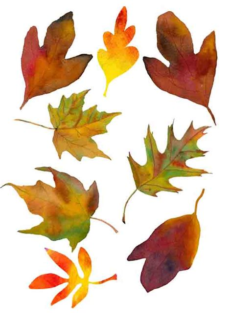 free printable fall leaves jessica sporn designs printables