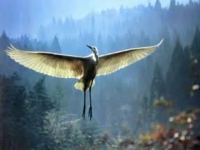 bird l oiseau 171 arbrealettres