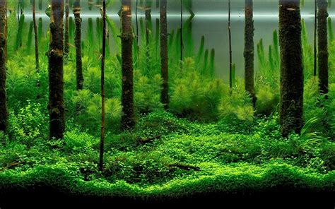 aquascape forest aquarium backgrounds pictures wallpaper cave