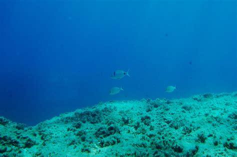 imagenes increibles bajo el mar rizona bajo el mar