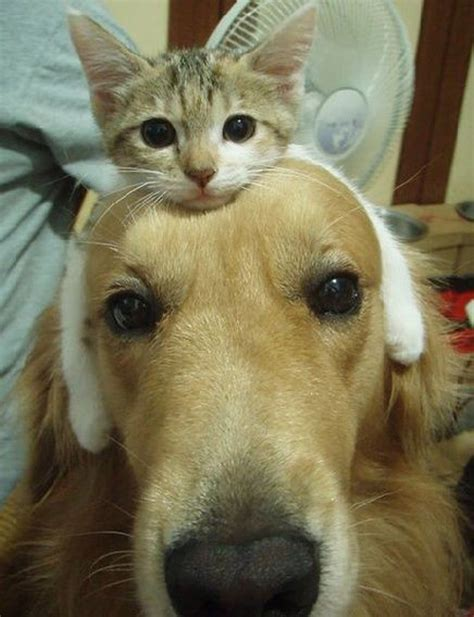 every dogs every should his own cat part 1 daily paws daily paws