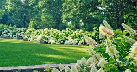 China Garden Orono by Traditional Spaces Hydrangea Hedge Design Pictures