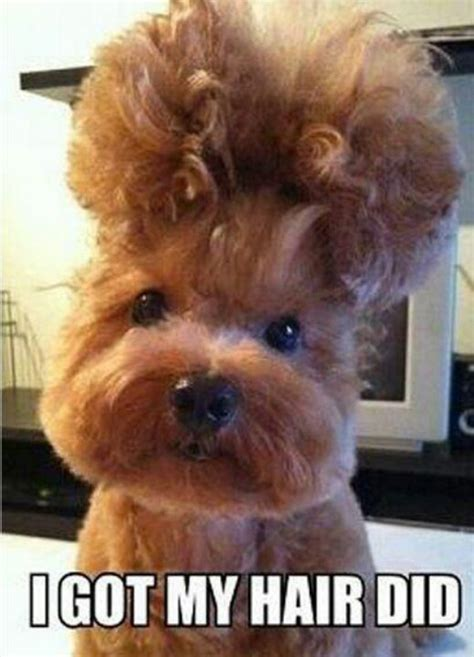 funny pictures of ladies with perms 75 best hairstyles images on pinterest curly hair