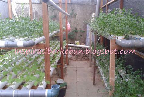 Bibit Seledri Hidroponik cara menanam seledri secara hidroponik inspirasi berkebun