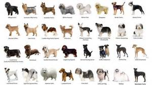types of dogs dog breeds the german shepherd rescue trust