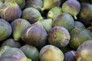 best fig figs planting growing and harvesting figs the