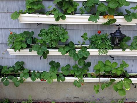Strawberry Garden Ideas 9 Unbeatable Diy Ideas For Growing Strawberries In A