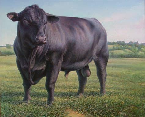 black angus hans droog artwork black angus bull original painting