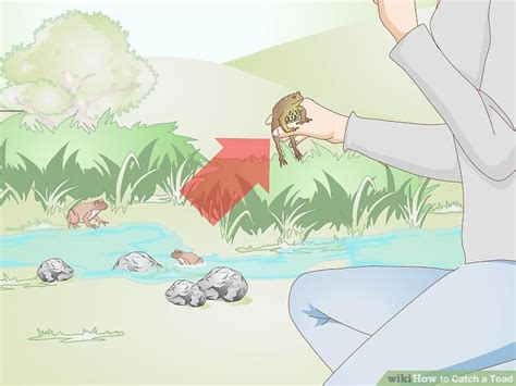 how to catch a toad in your backyard 3 ways to catch a toad wikihow