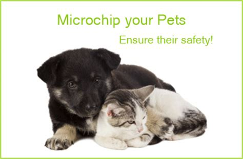 best pet microchip pet microchipping 5 reasons why it s a idea