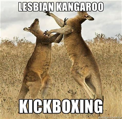 Kangaroo Meme - funny kangaroo meme by yertrenrut on deviantart