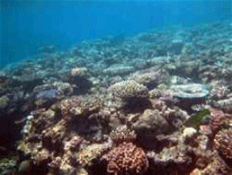 slope adalah geografi lingkungan terumbu karang atol