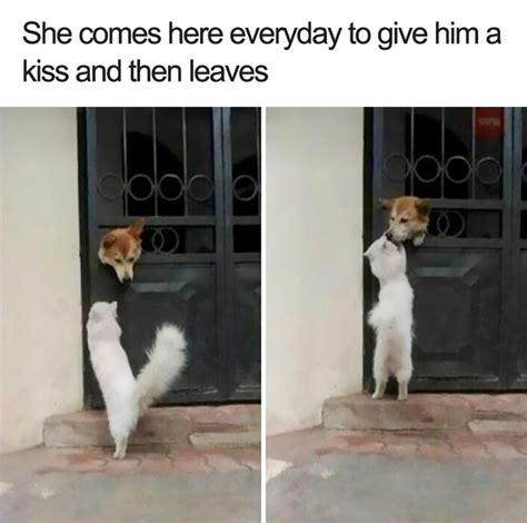 happiest dog memes      smile  ear  ear