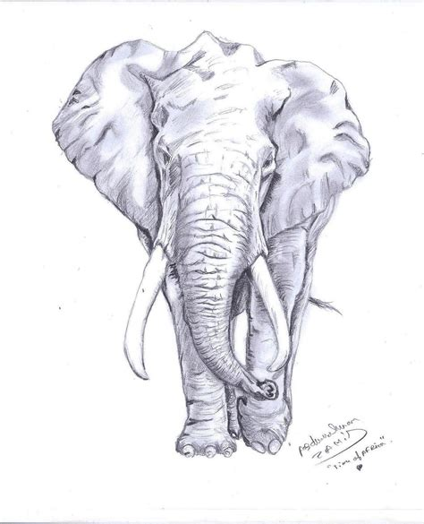 Drawing Elephant by Abderrahman Zahid Arts Elephant Drawing
