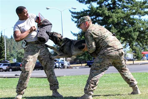 when to a puppy of defense from puppy to gt u s department of defense gt article