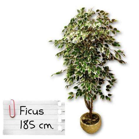 piante da arredo interno piante finte artificiali da arredo interno ficus benjamin