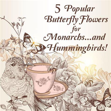 attracting butterflies and hummingbirds to your backyard 17 best ideas about hummingbird garden on pinterest