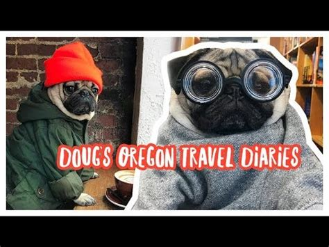 oregon pug rescue pug the comedians of the canine world
