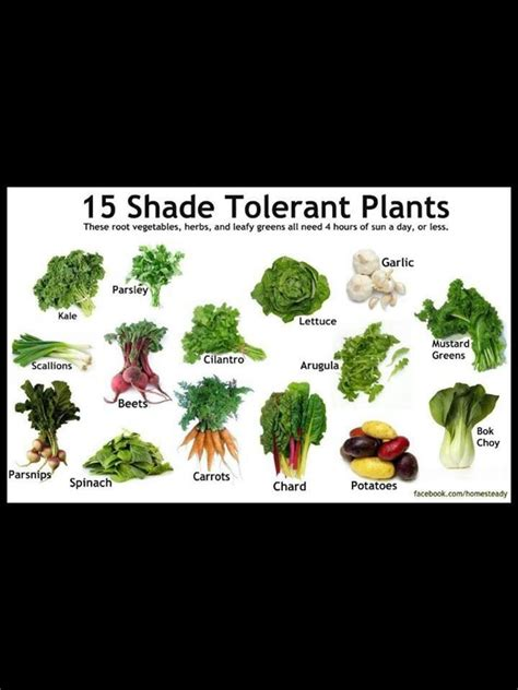 shade tolerant fruit trees shade tolerant edible plants garden