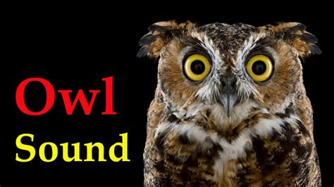 who is the voice of the owl on the eyeglasses commercials sound of owl at night voice of bird youtube