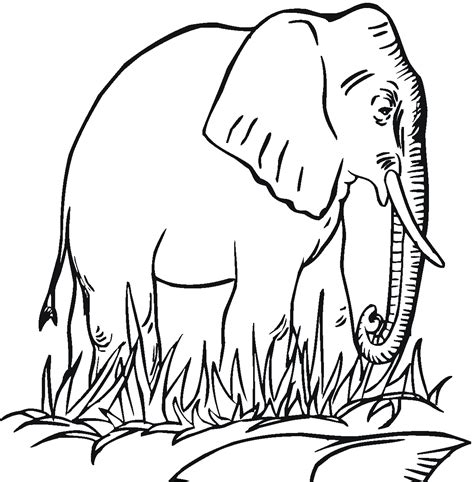 preschool coloring pages elephant free printable elephant coloring pages for kids