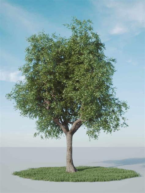 free tree model single tree model fstorm archvizscenes