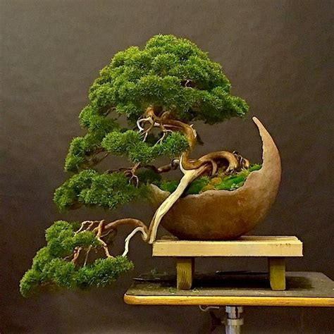 vasi da bonsai vasi per bonsai cura bonsai tipi di vasi per bonsai