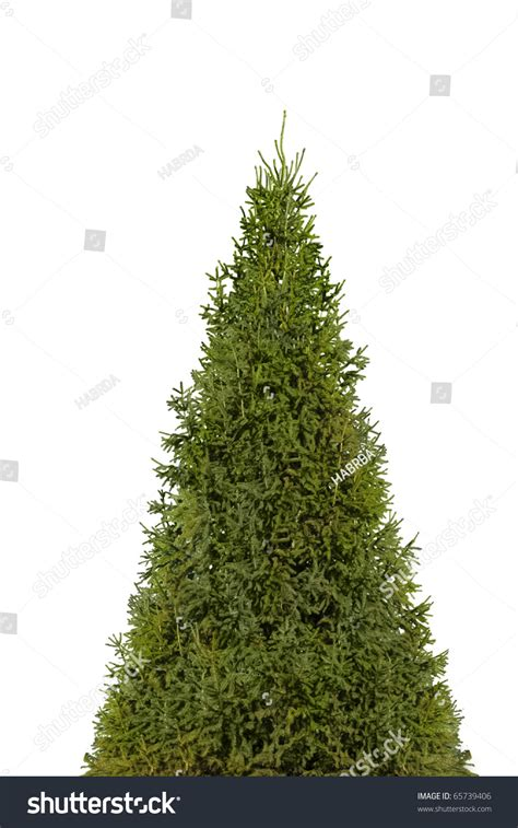 christmas tree isolated on white with photoshop path stock