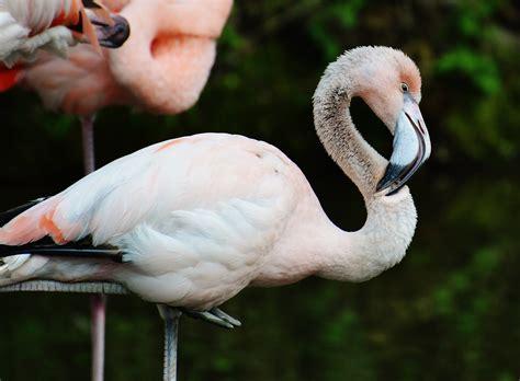 Boneka Plush Model Burung Flamingo gambar haiwan berwarna warni kecantikan ciptaan ilahi